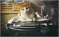 DJ Cat Caruso